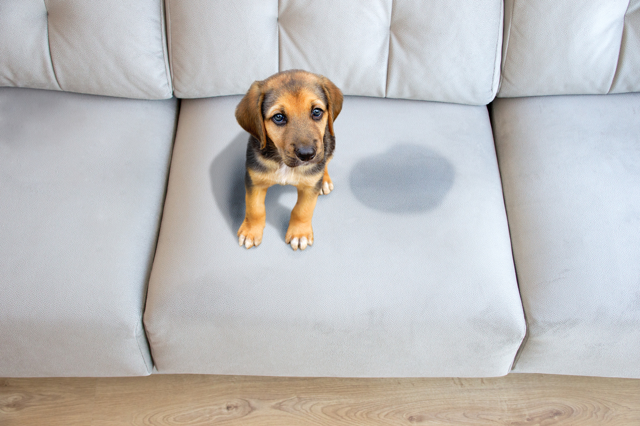best carpet cleaner for pet stains, professional carpet cleaning